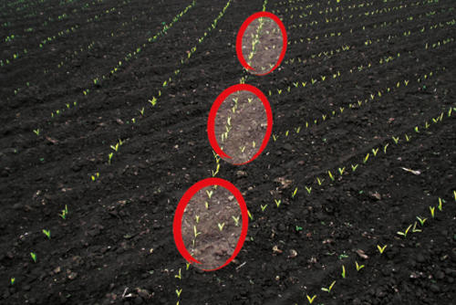 Maize seed row section control